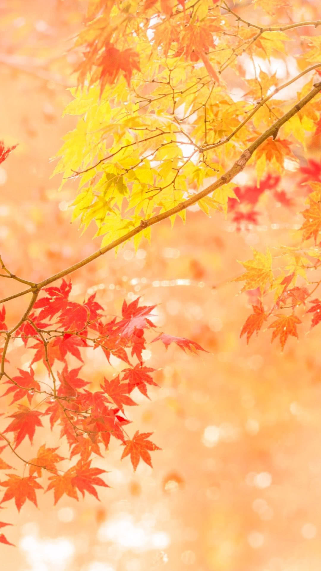 Glowing Autumn Leaves Iphone Wallpaper