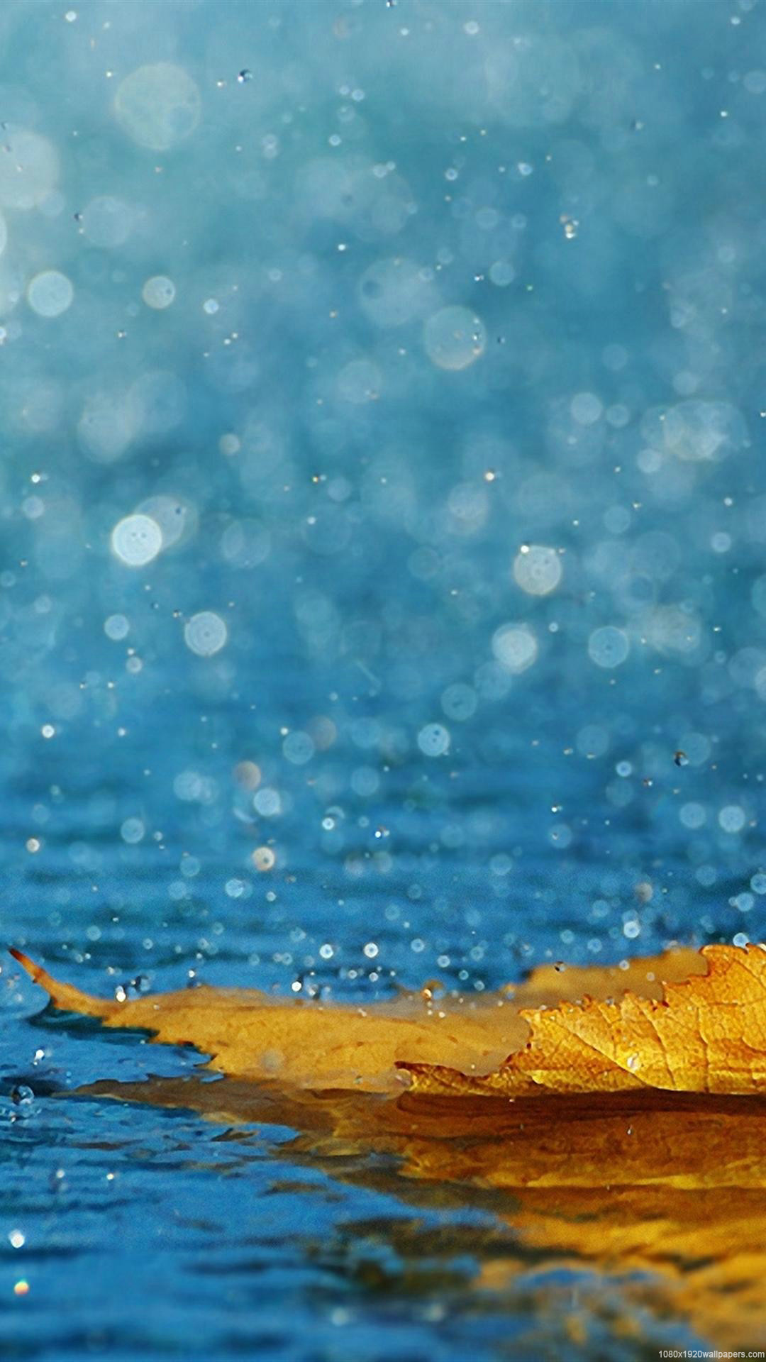 Autumn Leaf Water Rain Wallpapers