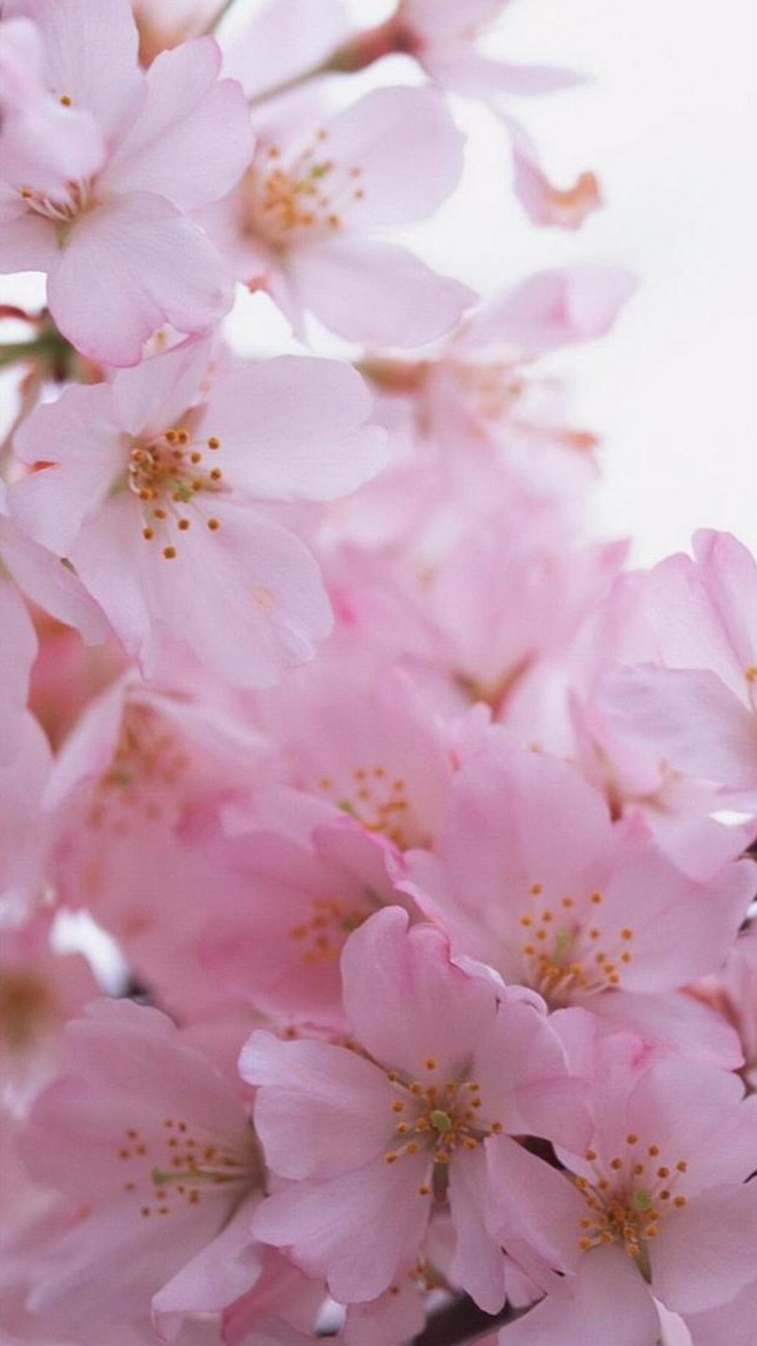 586574842 iphone 6 plus flower wallpaper ebfd7464a1bc555ec44d6b7e626c2d5b raw