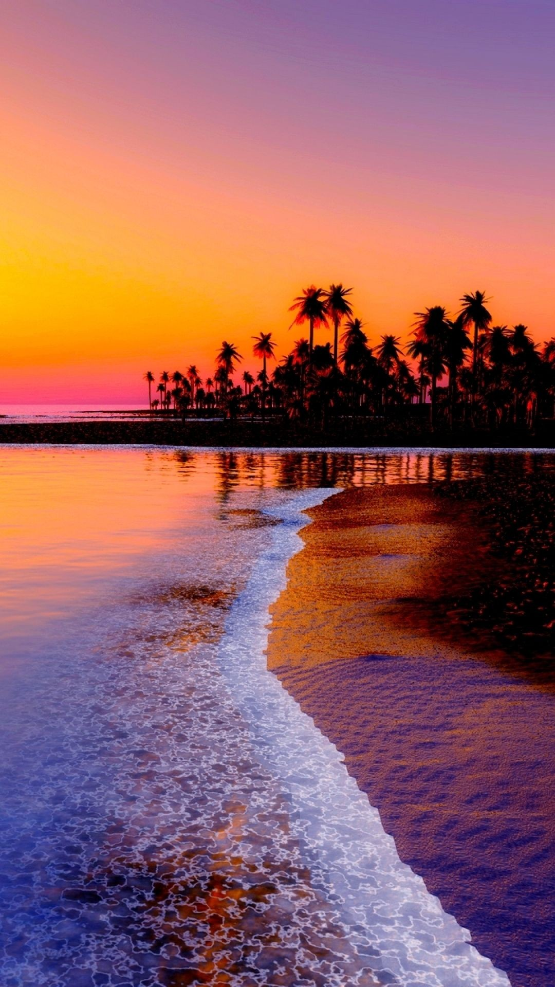 Sunset Branch Iphone Wallpaper