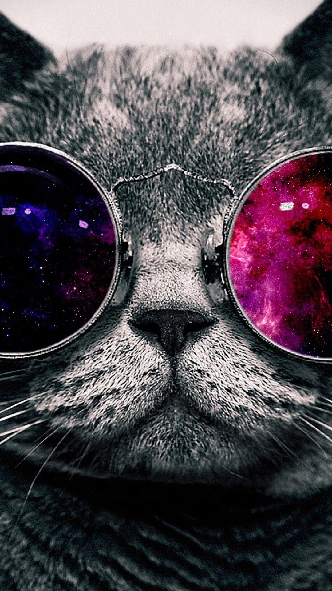 サングラスをかけた猫 Iphone Wallpapers