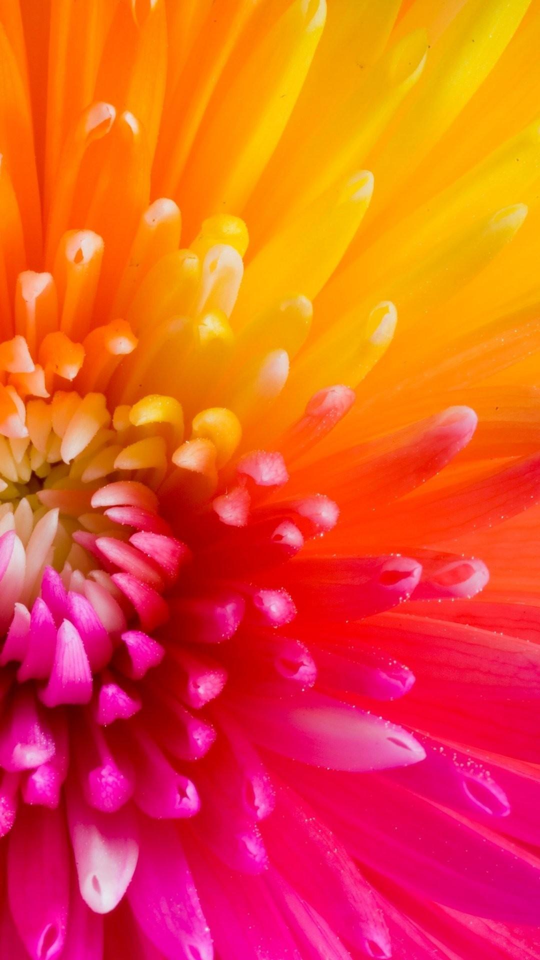 Apple Iphone 6 Flower Wallpaper Hd Flowers Healthy