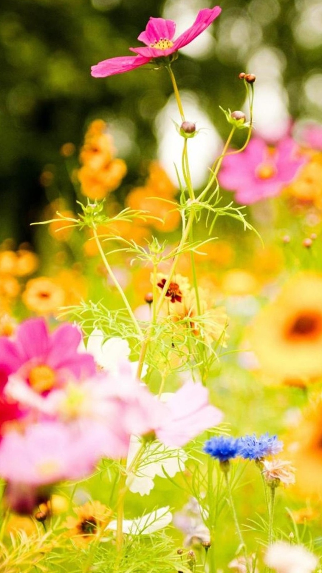 Spring Flower Garden Iphone Wallpaper