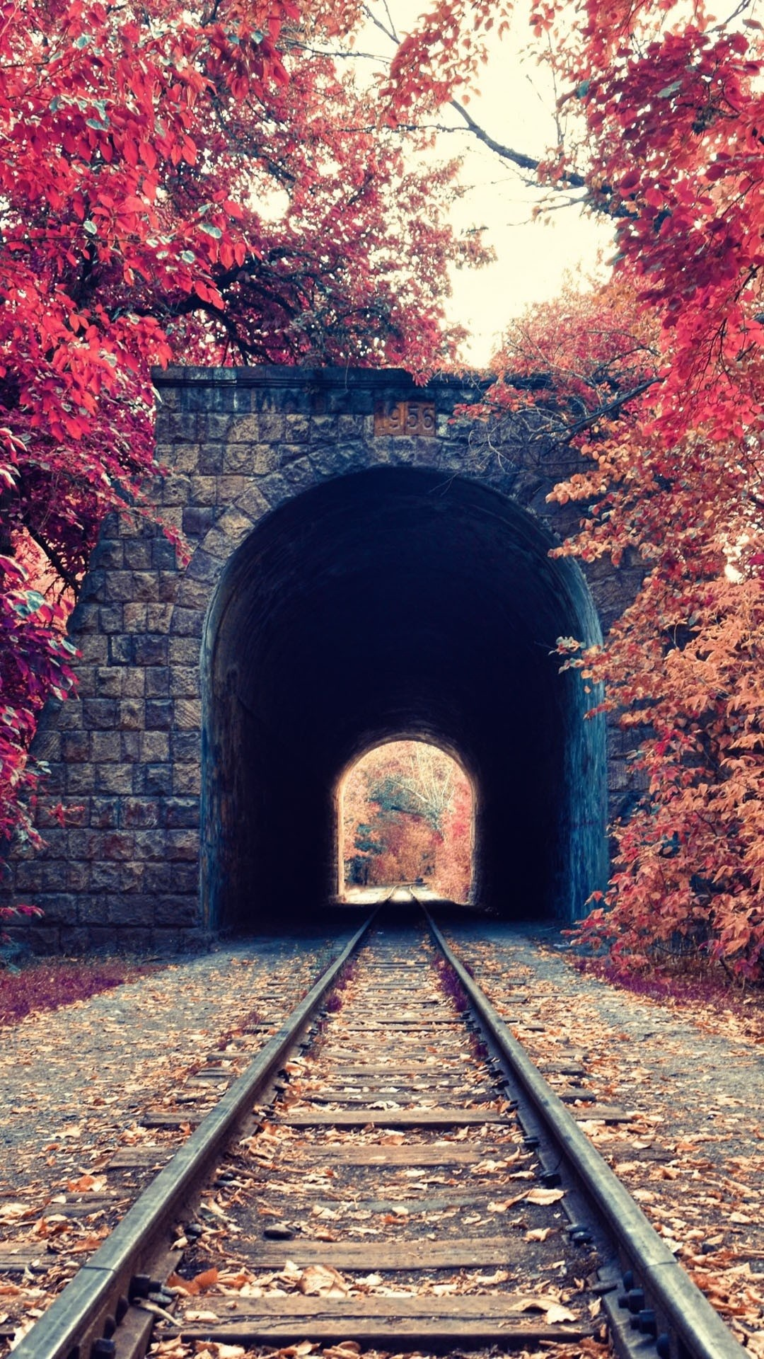 Iphone 6s wallpaper tumblr hd - A Tunnel In The Woods
