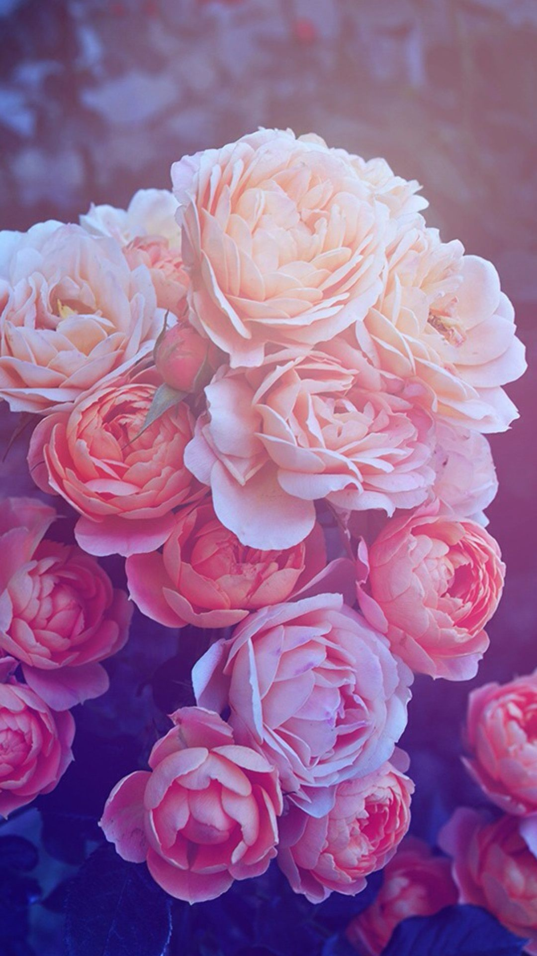 lovely hd wallpaper iphone galaxy elegant rose background wallpaper iphone of background for rose gold iphone 9a6ef6db6cef06eda7f61e28bcfb6f4c raw