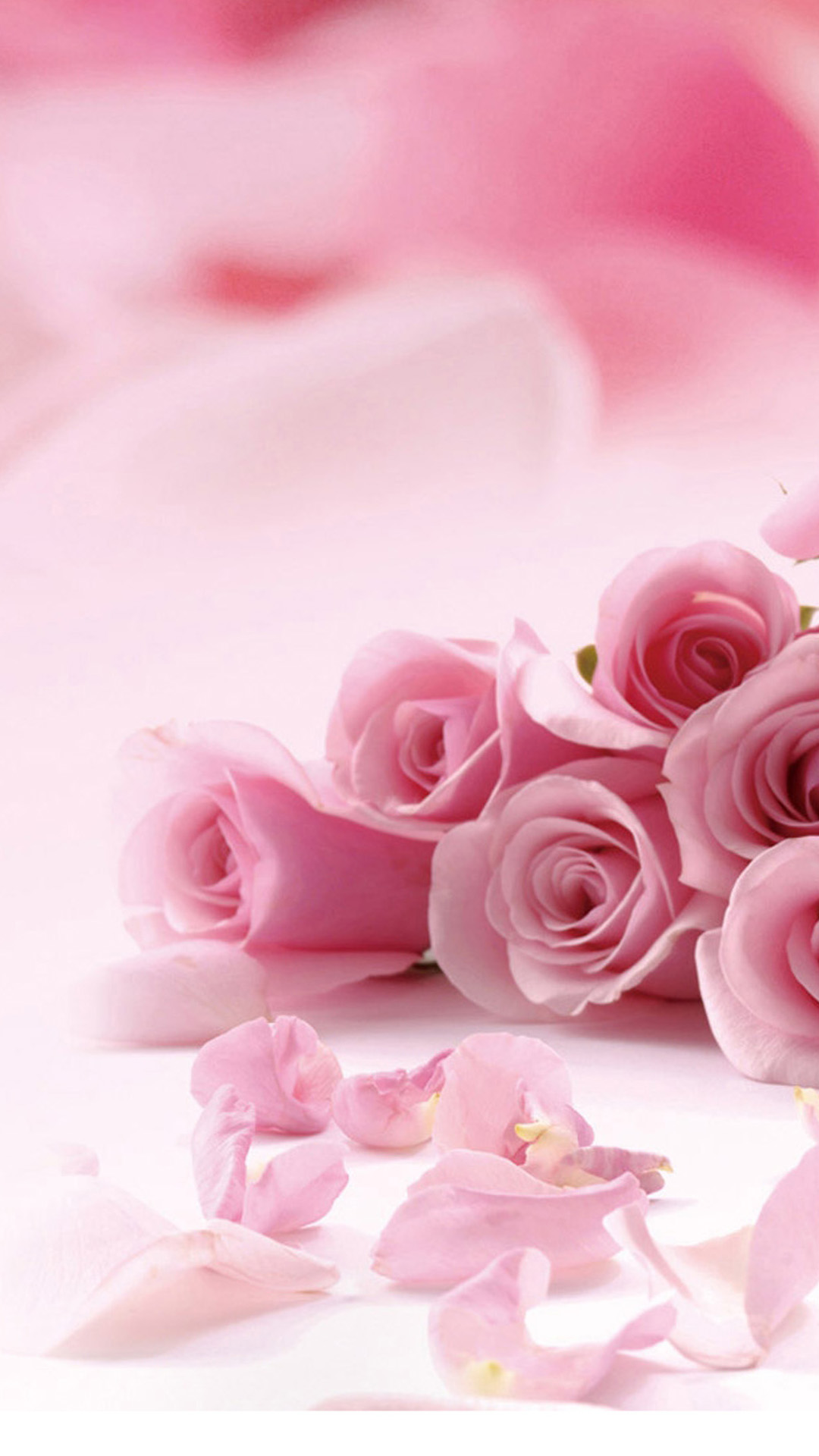 Pretty Pink Rose Iphone Wallpapers