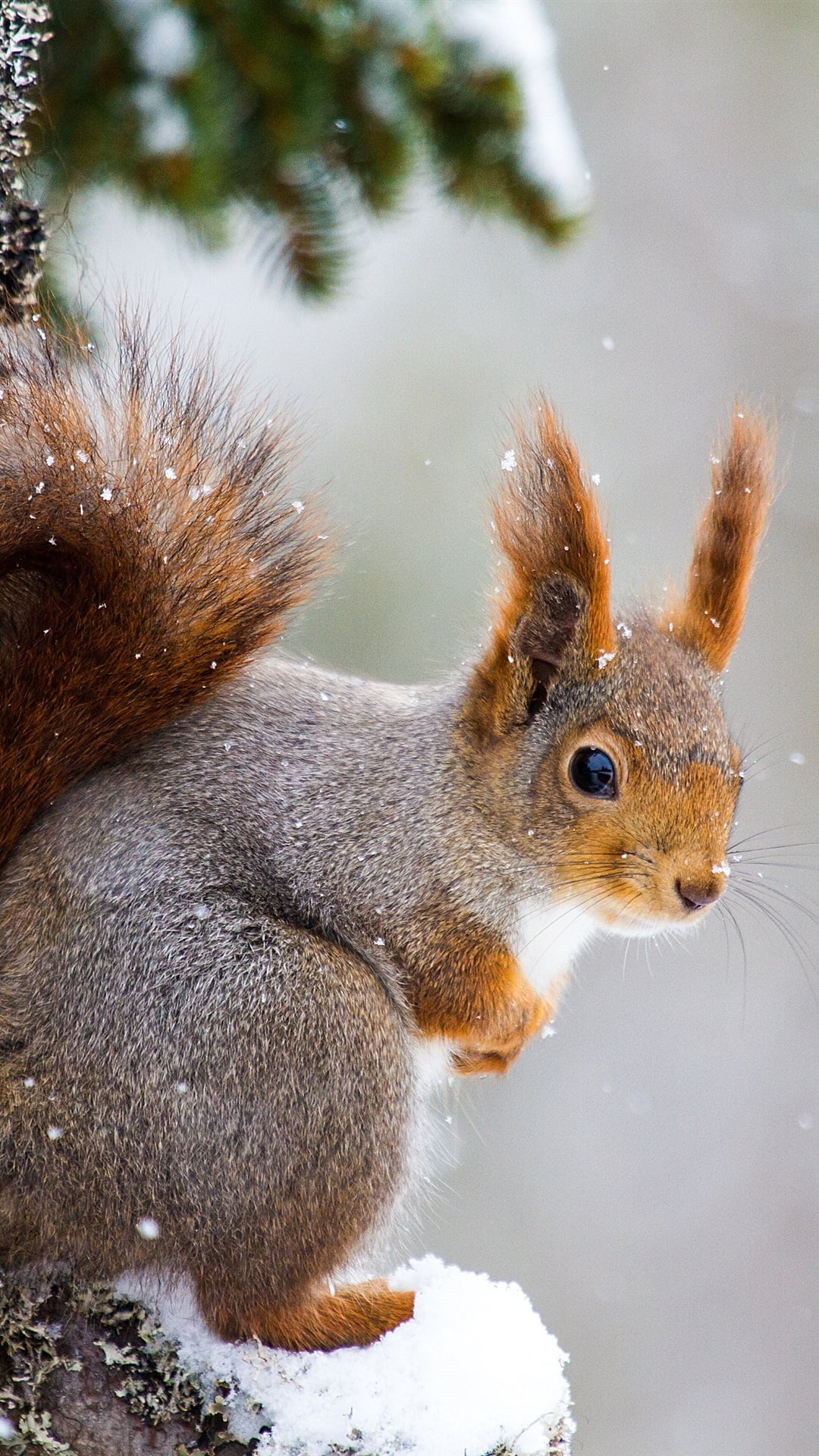 The 16+ Hidden Facts of Iphone Wallpaper Squirrels: You ...