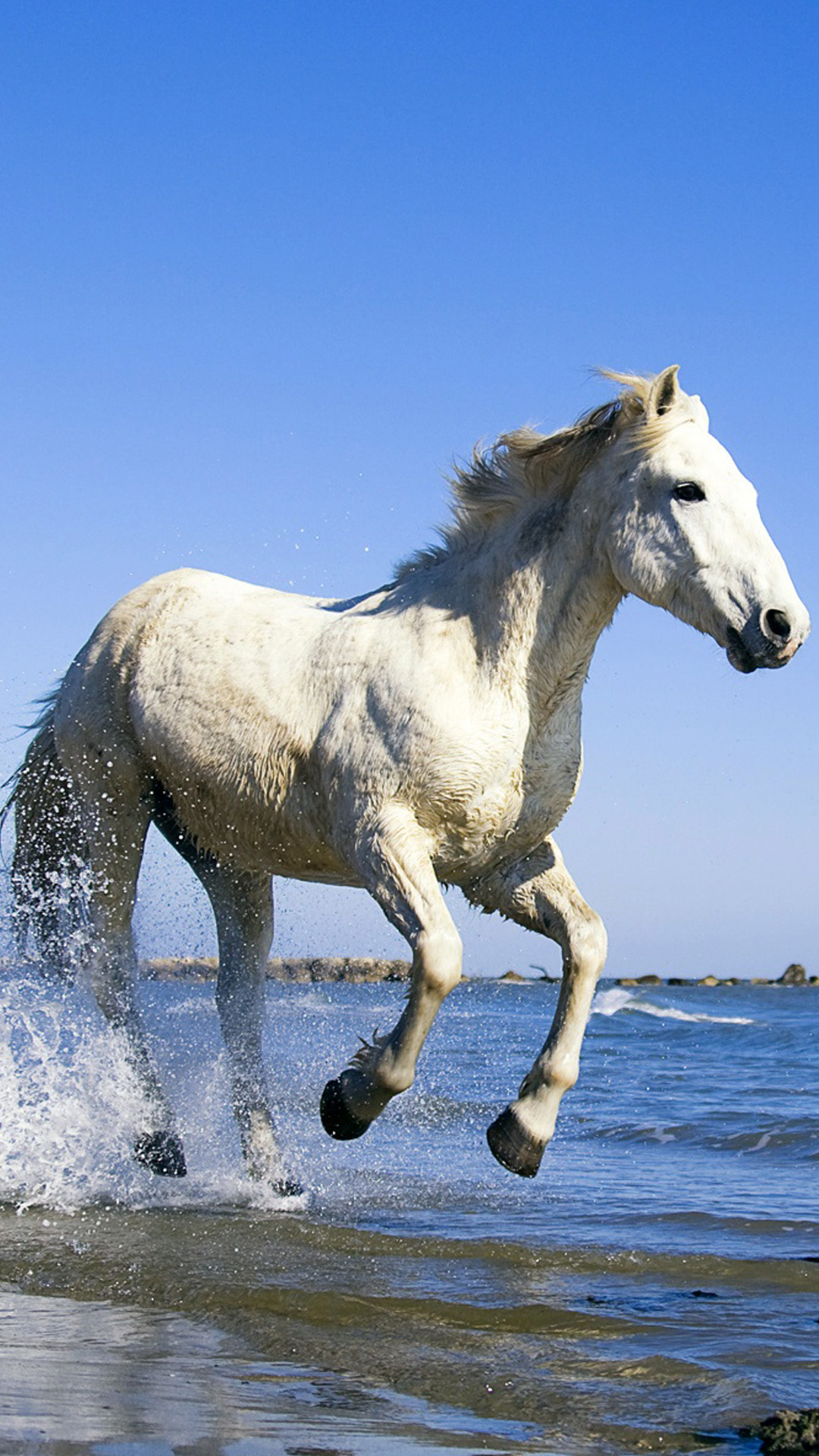 White Horse Galloping Along The Beach Iphone Wallpaper