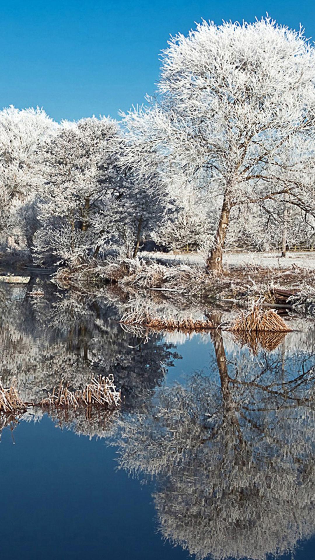 泉の辺りの真っ白な木 Iphone Wallpapers